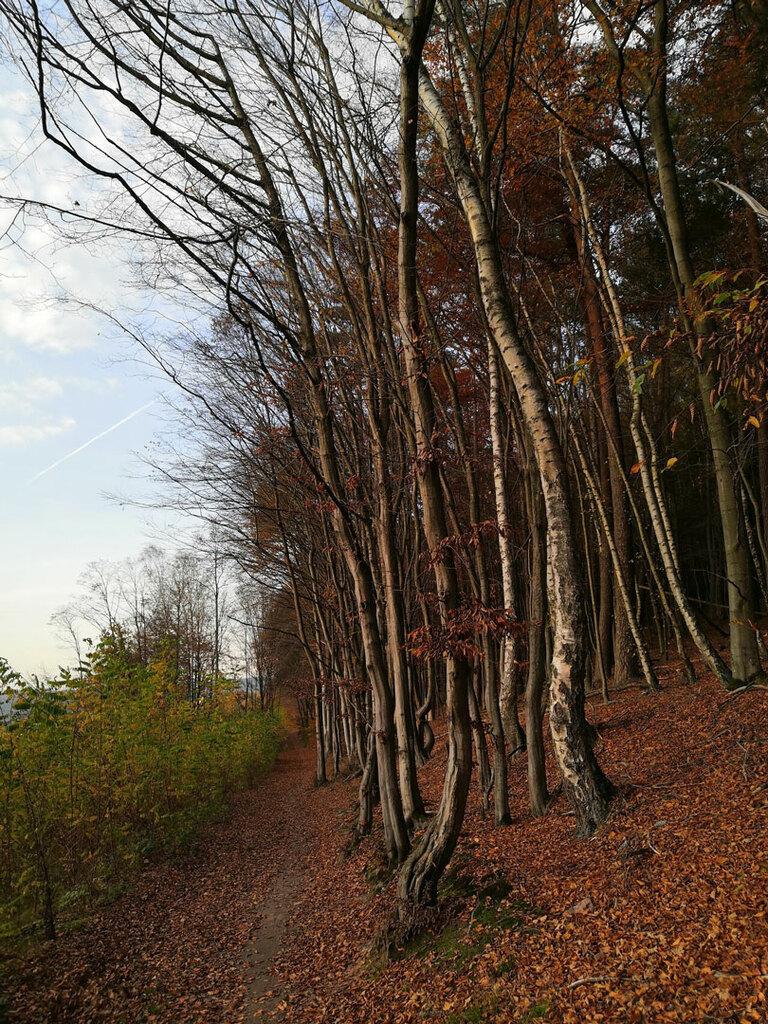 Herbstwald Spessart